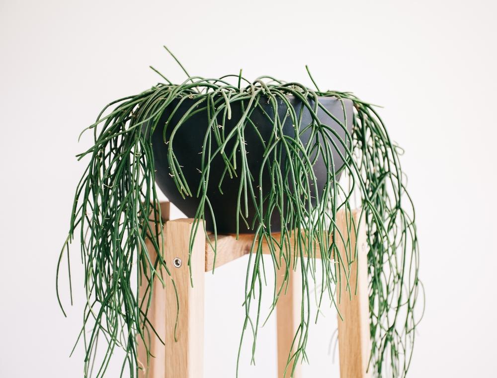 Timber Plant Stands - JD Lee Furniture