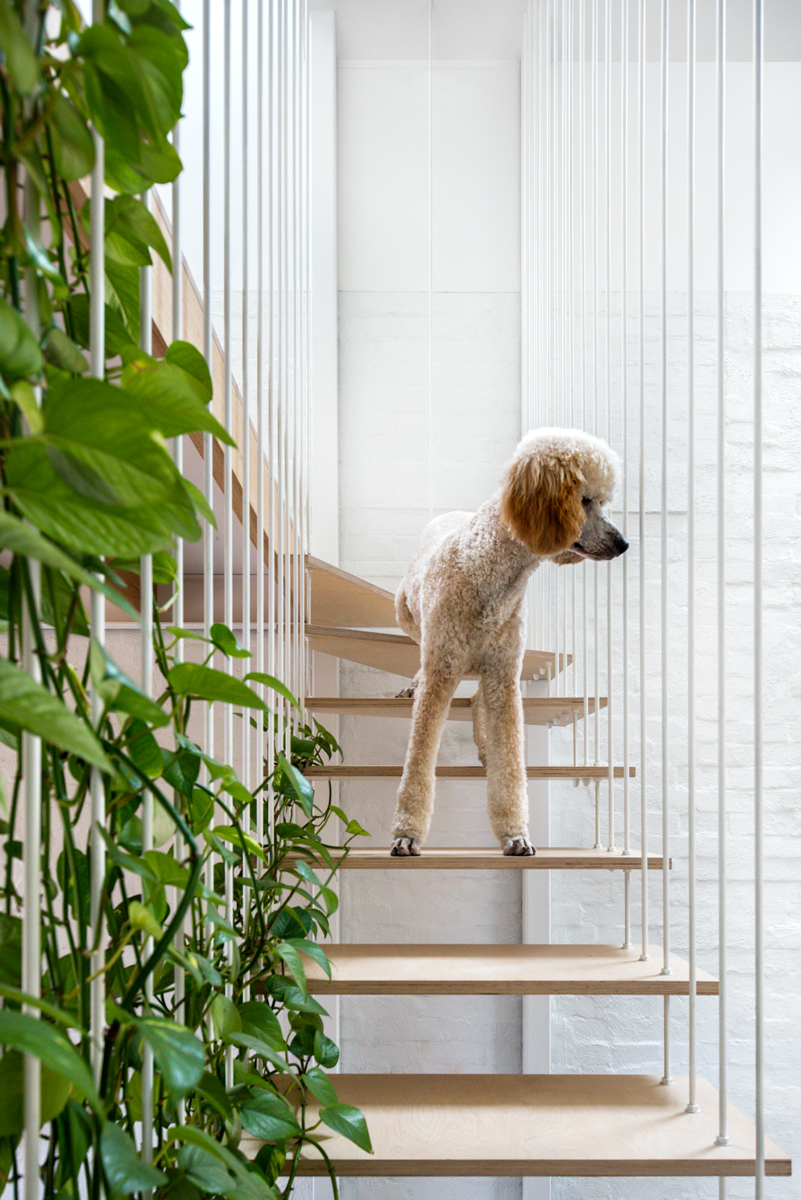 Muddy Checks The Perimeter At His Balmain East Home By Tonkin Zulaikha Greer.